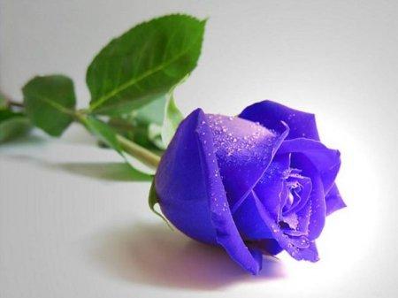 Где смотреть онлайн сериал Синяя роза?